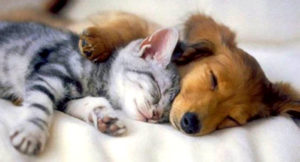 6-4-14-dogs-and-cats-who-love-to-cuddle15