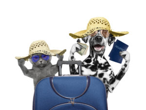 Cat and dog are going on a trip to travel -- isolated on white