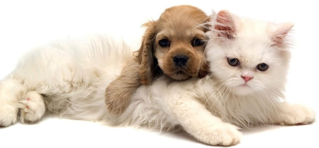 puppies-and-kittens-for-free-kittens-and-puppies-wallpaper-hd-cats-wallpaper-hd