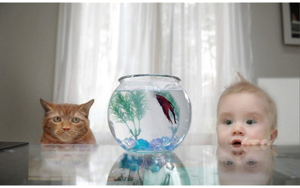 baby-with-cat-6