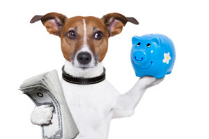 dog holding a blue piggy bank and a stack of bills