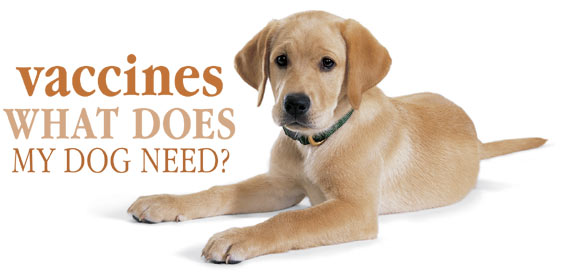 Canine Vaccines Dvc Recommends
